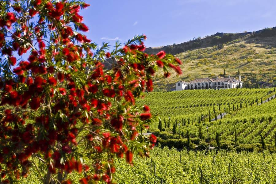4- Wine tour to Ronda - winery